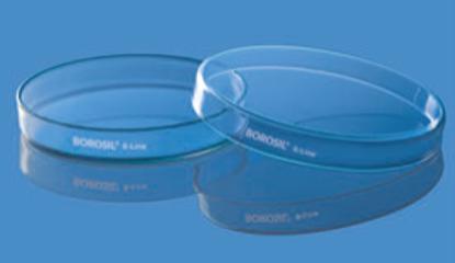 Culture and Petri Dish - 100 x 17 mm